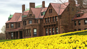 Daffodil_Mansion