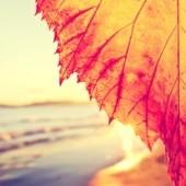 Autumn in Newport, RI